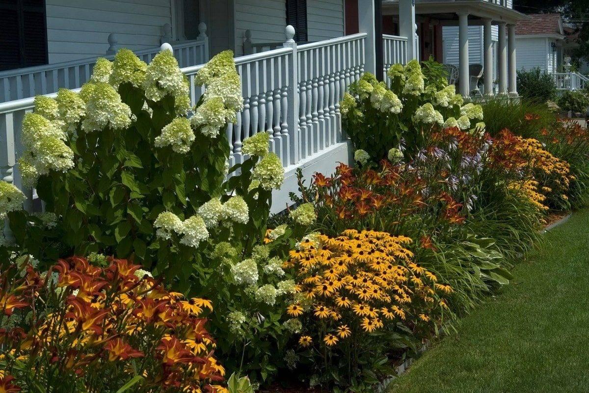 Многолетние низкорослые бордюрные кустарники и цветы