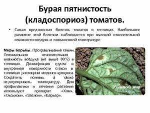 Лечение кладоспориоза или бурой пятнистости томата