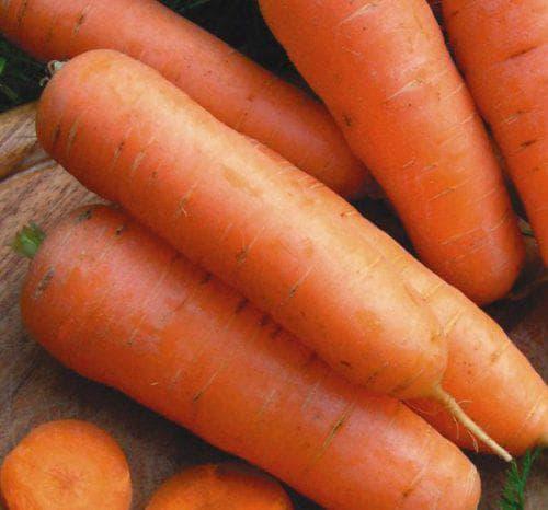 Морковь шантане: 70 лет отличного качества!