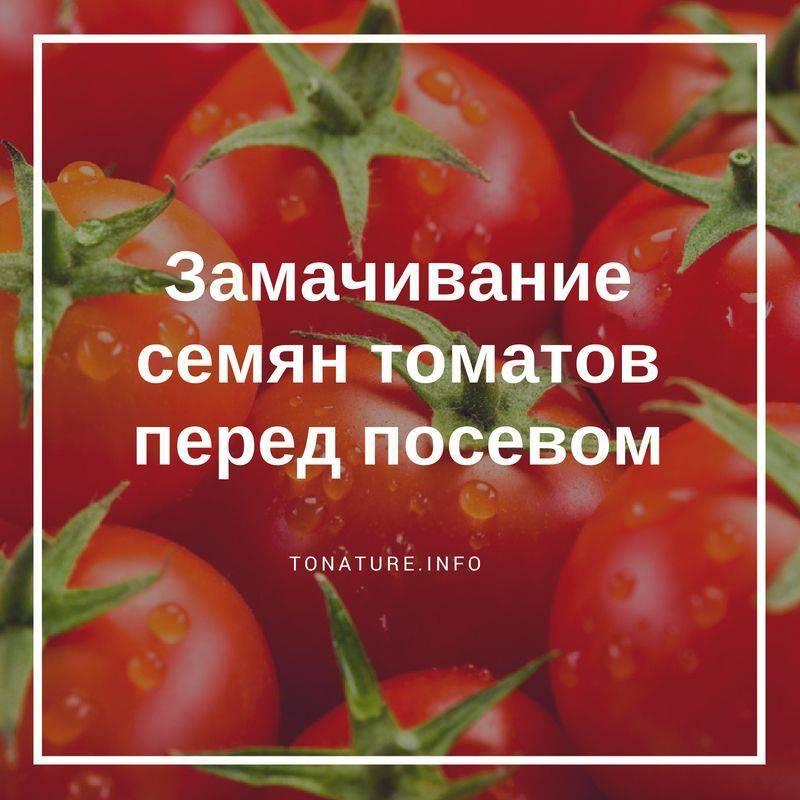 Эффективные способы обработки семян помидоров перед посадкой на рассаду - описание с подробной инструкцией