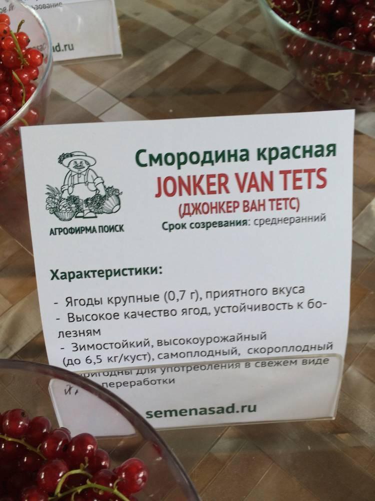 Красная смородина джонкер ван тетс – описание сорта, особенности, правила выращивания и ухода