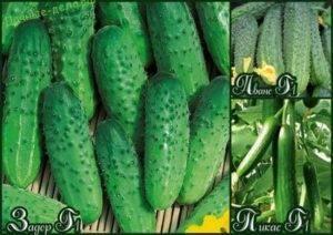 Лучшие сорта огурцов для подмосковья: описание с фото, выращивание и уход