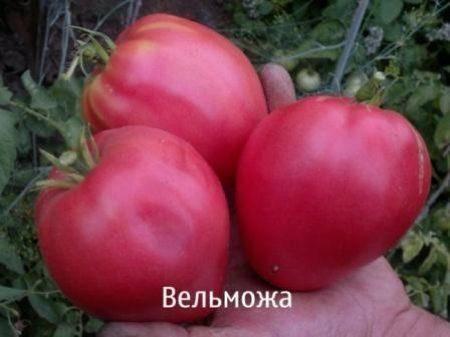 Характеристика и описание гибрида томата великосветский f1, выращивание