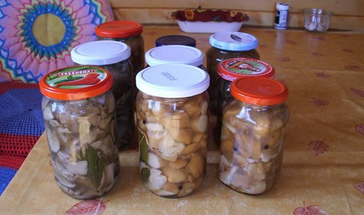 Засолка грибов на зиму - рецепты