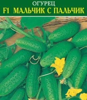 Огурец мирабелла f1 — описание и характеристика сорта