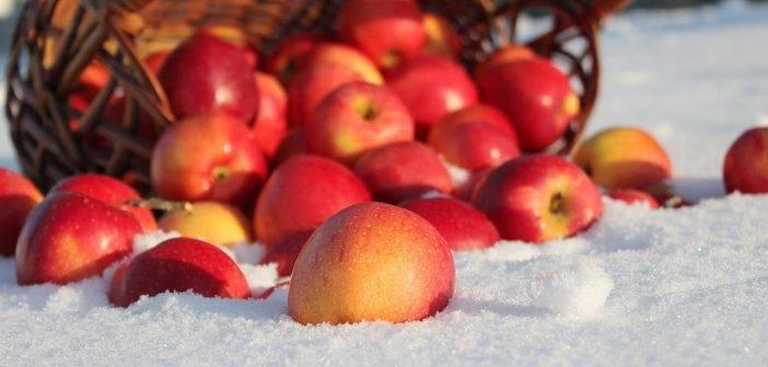 Яблони для Сибири: описания самых лучших сортов и как правильно ухаживать