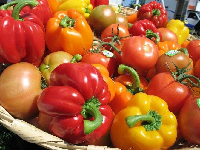 Советы для богатого урожая: чем подкормить рассаду помидор, чтобы были толстенькие и устойчивые стебли?