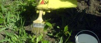 Правила применения соды против сорняков на огороде и меры предосторожности