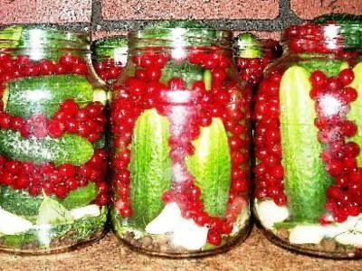 Заготовки из красной смородины на зиму