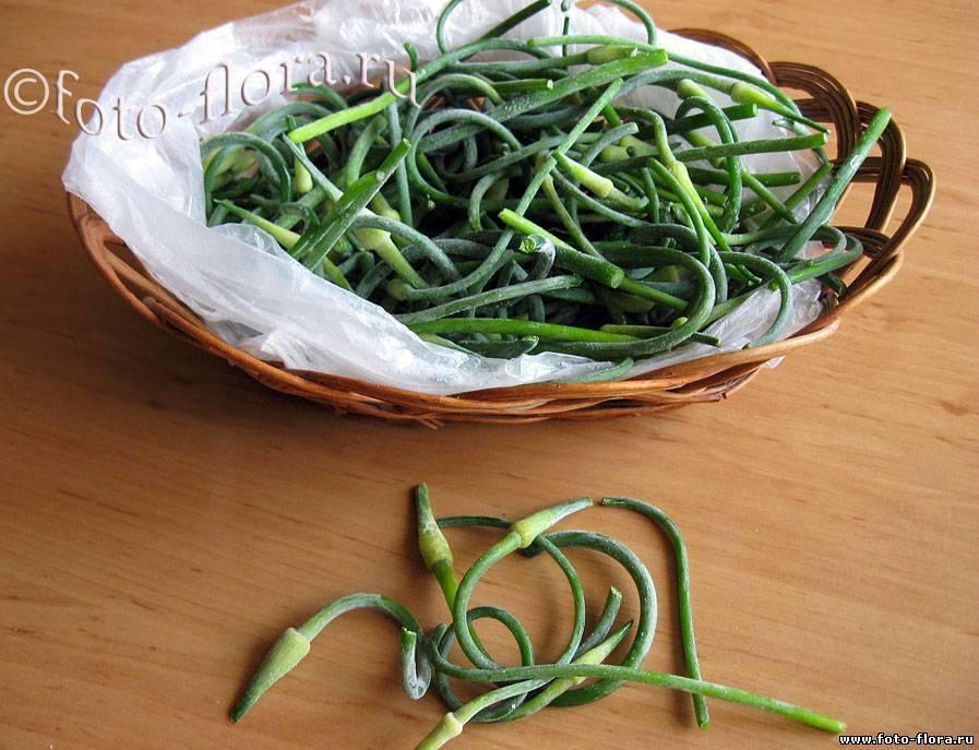 Что можно приготовить из чесночных стрелок? рецепты приготовления на зиму и закуски