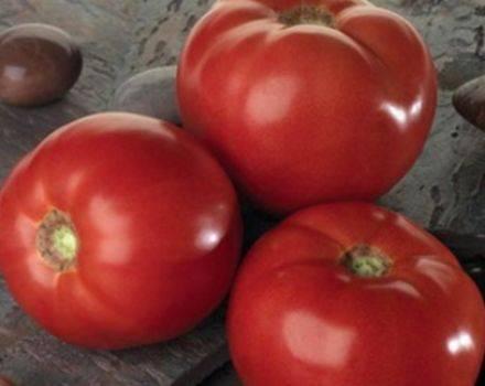 Раннеспелый сорт, который точно вам понравится — томат «розовая мечта»