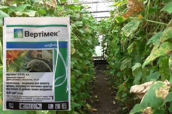 Вертимек: применение для огурцов, инструкция, приготовление раствора и правила обработки от вредителей