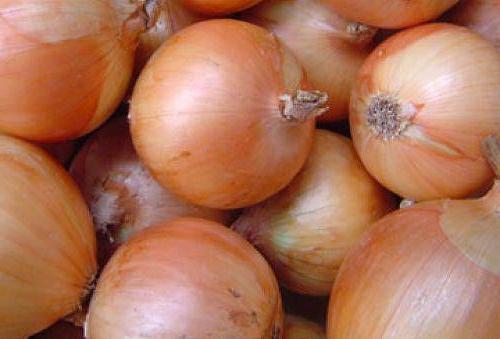 Лук халцедон: выращивание из семян
