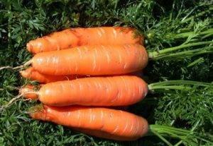 Быстро и просто избавляемся от сорняков — прополка моркови керосином