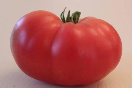 Томат таня характеристика и описание сорта. происхождение сорта помидора«таня ф1»