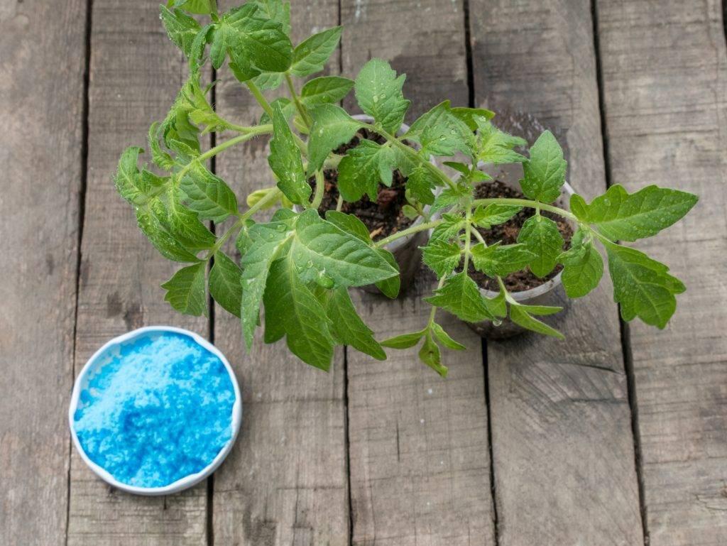Правила применения медного купороса в садоводстве весной, летом и осенью, инструкция