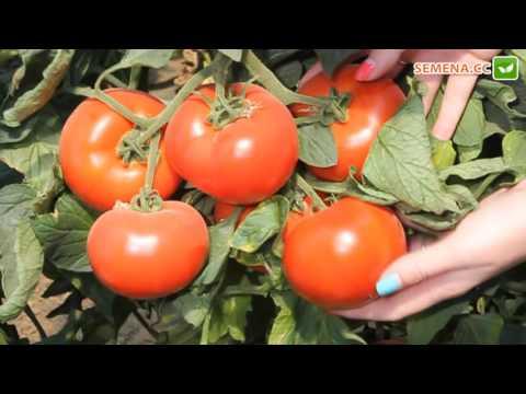 Описание гибридного томата государь и особенности выращивания сорта