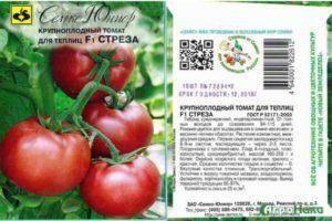 Томат сват f1: описание и характеристика сорта, урожайность с фото