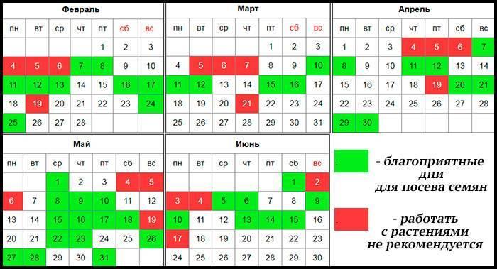 Когда сажать огурцы: посадочные дни по лунному календарю на май 2020 года