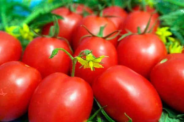 Описание сорта томата Розовая жемчужина, его характеристика и урожайность