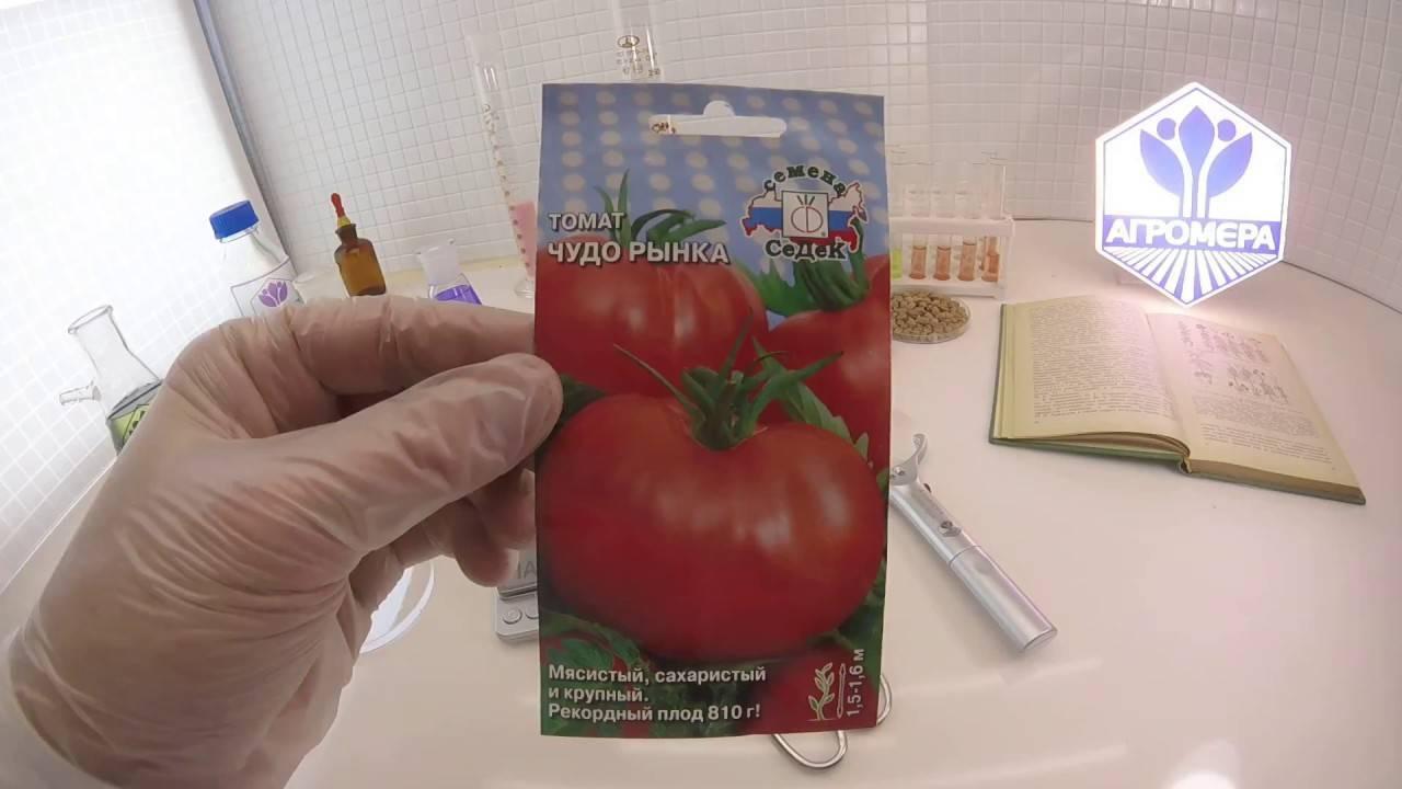 Характеристика и описание сорта томата лентяйка, его урожайность