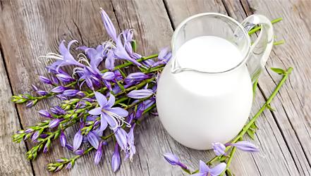 Из чего и как делают порошковое сухое молоко в россии