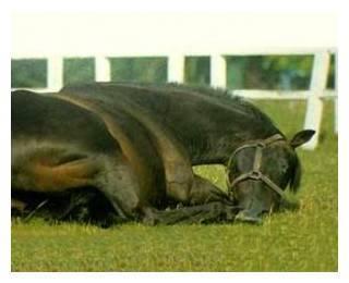 Методы диагностики, лечения и профилактики колик у лошадей
