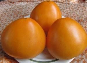 Сорт томата «купола россии»: фото, отзывы, описание, характеристика, урожайность