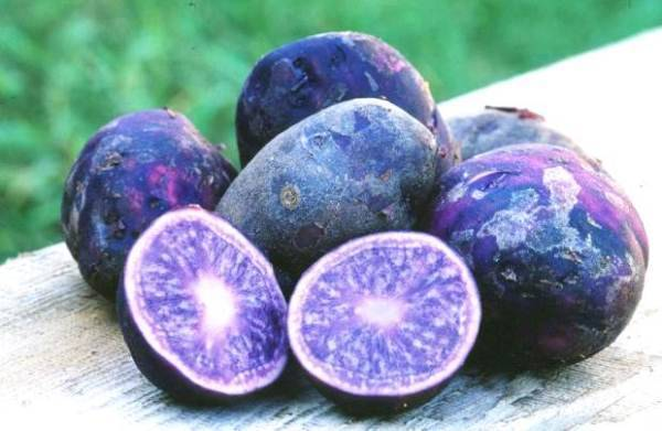 Описание сортов фиолетовой картошки, ее полезные свойства