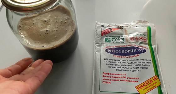 Фитоспорин от фитофторы на помидорах: правила обработки, отзывы
