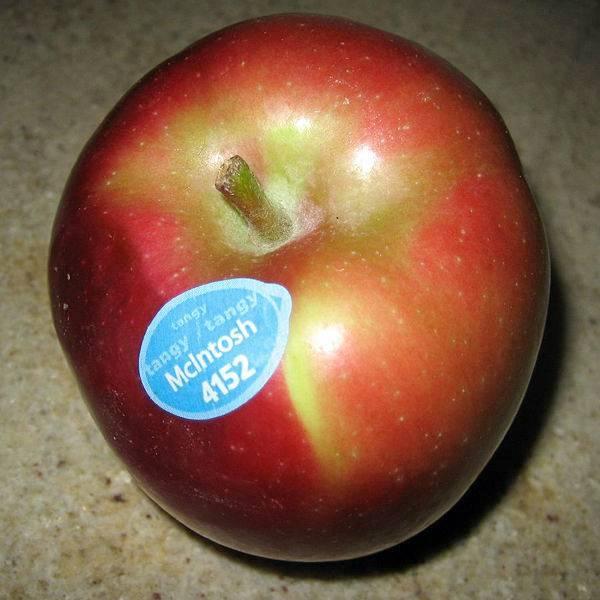 Сорт яблони макинтош – описание, фото