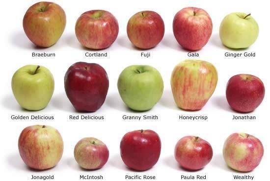 Яблоня «мекинтош»: описание сорта, фото и отзывы