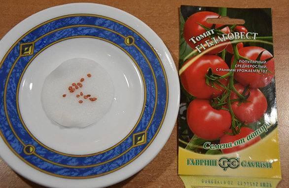 Как и в чём замачивать семена томатов перед посадкой: топ-3 растворов