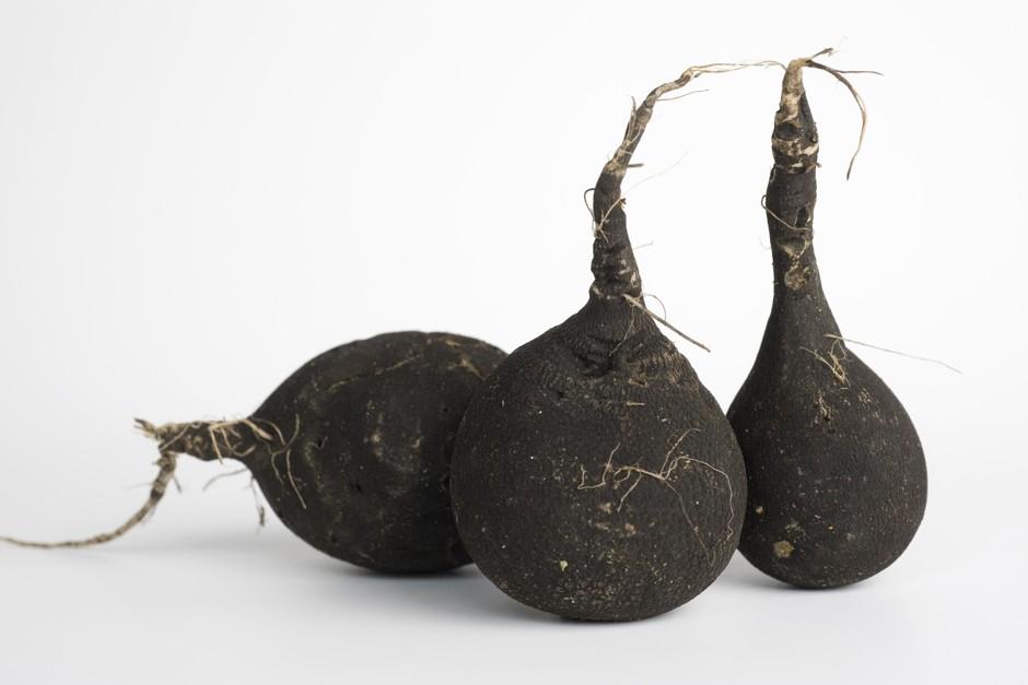 Черная редька: ее польза для организма человека, возможный вред, способы и нормы употребления