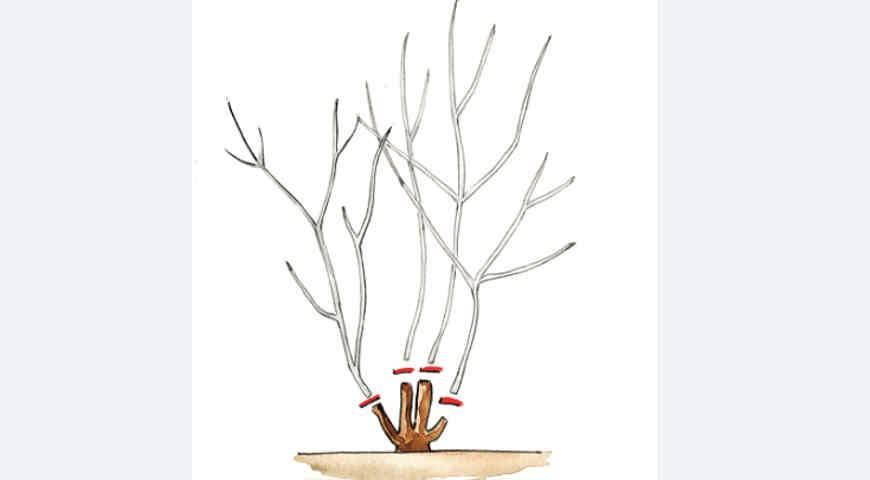 Тонкости обрезки декоративных кустарников летом, весной и осенью