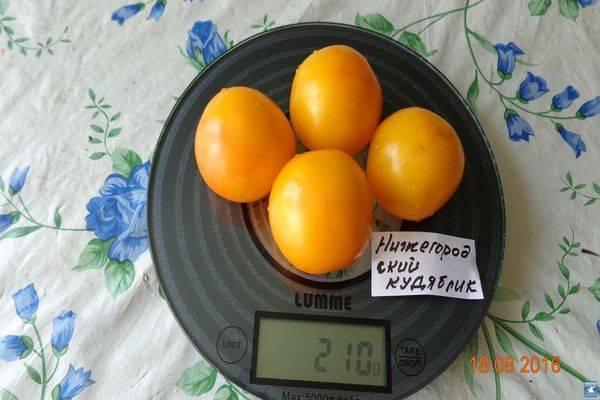 Помидорки как конфетки — томат нижегородский кудяблик: описание сорта, отзывы