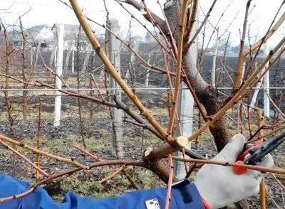 Когда и как прививать персик весной и летом: способы и их пошаговые инструкции