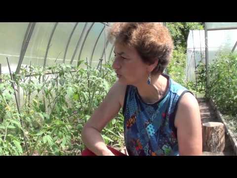 Виды фунгицидов для огурцов в теплице и инструкция по применению