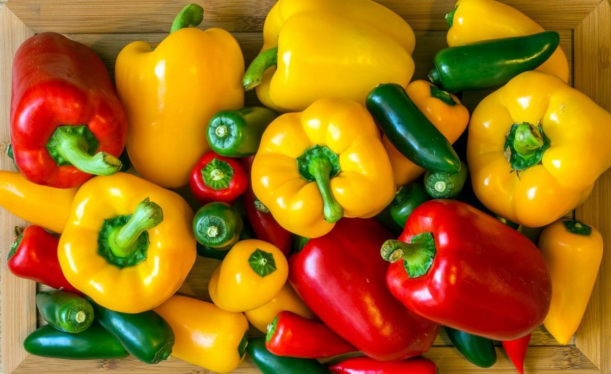 Обзор сортов желтого перца: описания с фото, выращивание и уход, фото