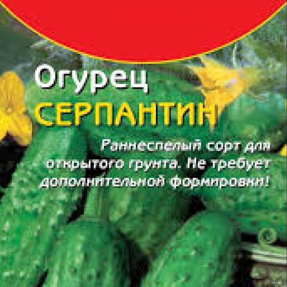 Классический русский сорт огурцов «серпантин»: фото, видео, описание, посадка, характеристика, урожайность, отзывы