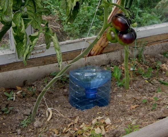 Капельный полив своими руками из пластиковых бутылок: фото и видео