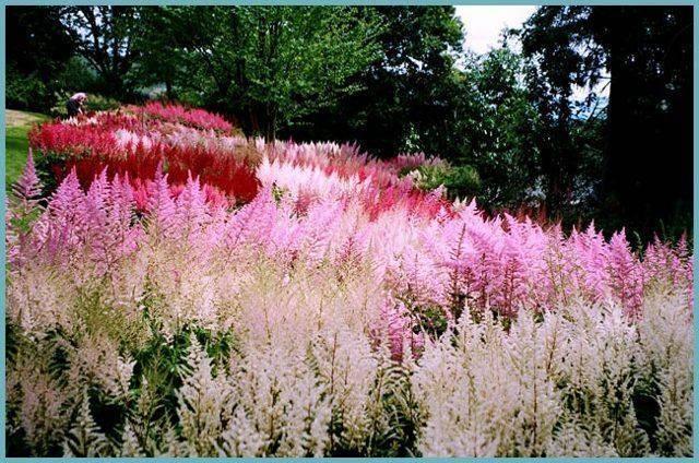 Цветы ландыши: уход, особенности посадки, фото