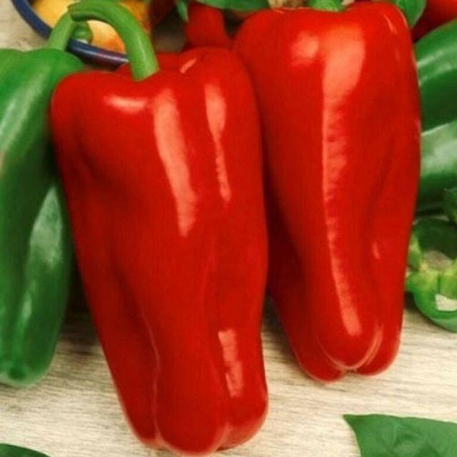 Характеристика и описание перца сорта богатырь, урожайность и выращивание