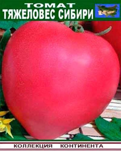 Описание сорта томата тяжеловес сибири: характеристика, отзывы, урожайность