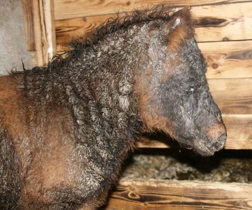 Распространённые болезни лошадей