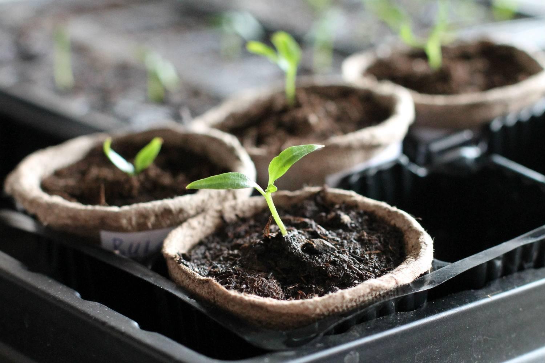 Навоз: как приготовить удобрение на даче или дома