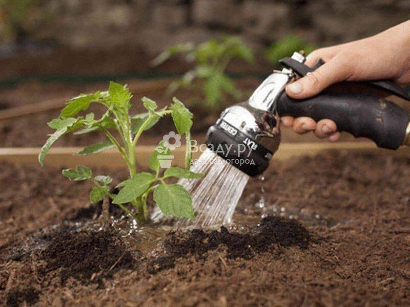 Как часто увлажнять помидоры капельным поливом из пластиковых бутылок в теплице из поликарбоната