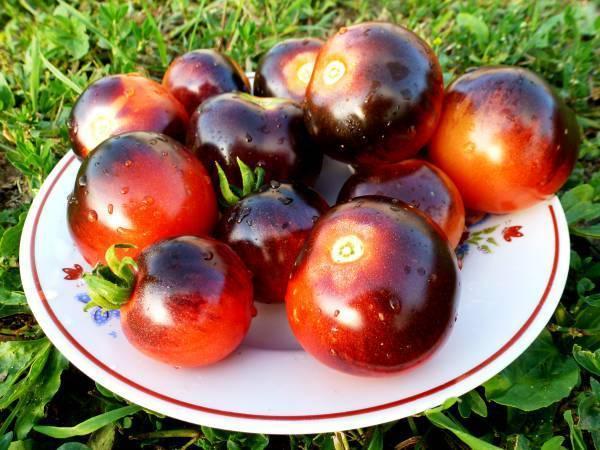 Урожайность, характеристика и описание сорта томата Черника