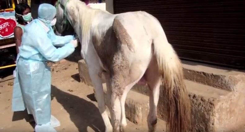 Болезни лошадей — симптомы, лечение и профилактика