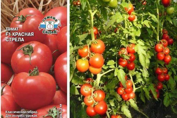Красная стрела (томат): описание сорта и особенности выращивания